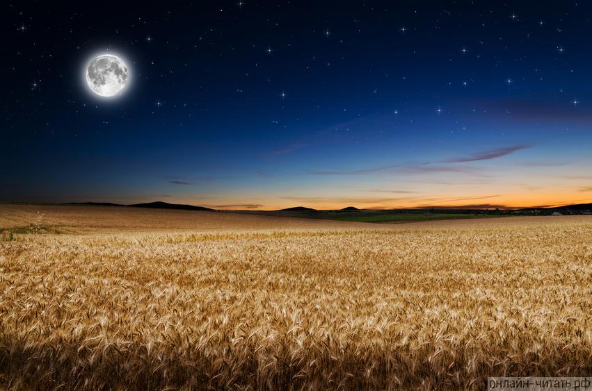 ночная луна в поле фотографии собрали