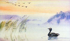 Серая Шейка осталась на реке одна и долго провожала глазами улетавший косяк. Иллюстрация В. Дугина к рассказу Д. Н. Мамина-Сибиряка «Серая Шейка»