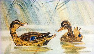 — Ты держись вон около того берега, где в реку сбегает ключик, — советовала она. — Там вода не замерзнет целую зиму… Иллюстрация В. Дугина к рассказу Д. Н. Мамина-Сибиряка «Серая Шейка»