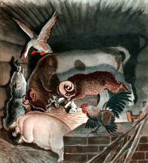 Только вошёл волк — бык его и припёр рогами к стене... Иллюстрация Д. Горлова к русской народной сказке «Зимовье зверей»