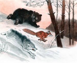Волк рвался-рвался, насилу вырвался, выскочил из избушки да пустился бегом без оглядки. А медведь с лисой — за ним! Иллюстрация Д. Горлова к русской народной сказке «Зимовье зверей»
