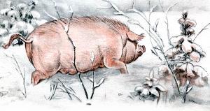 Попадается им навстречу свинья. Иллюстрация Д. Горлова к русской народной сказке «Зимовье зверей»