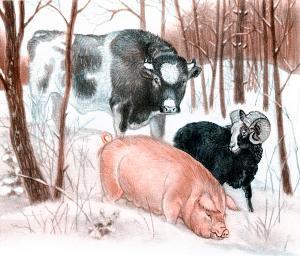 Пошли дальше втроём: бык, баран и свинья. Иллюстрация Д. Горлова к русской народной сказке «Зимовье зверей»