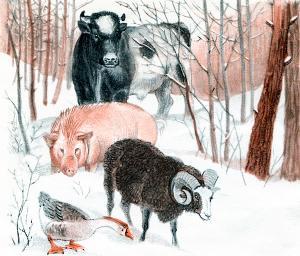 Пошли вчетвером: бык, баран, свинья и гусь. Иллюстрация Д. Горлова к русской народной сказке «Зимовье зверей»